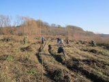 Военни и лесовъди засадиха 7 декара с тополи