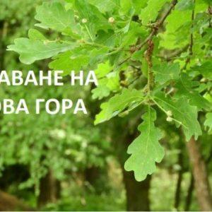 """Започва кампания за залесяване на изгорялата гора над """"Дивдядово"""""""