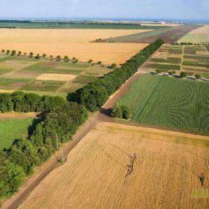 Община Шумен обявява търгове за отдаване под наем на земеделски земи