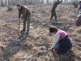 Залесяват нова гора във Велики Преслав