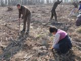 Залесяват нови 50 декара гора между селата Ловец и Сушина