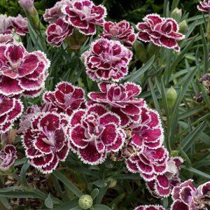 Празнуваме Цветница! Занесете върбова клонка и цветя в дома си!