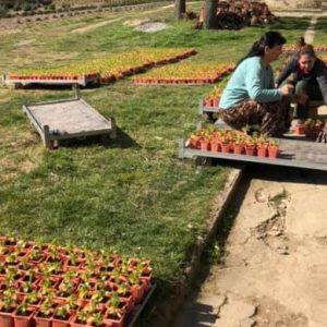 Разсадникът в Менгишево готов за пролетното зацветяване