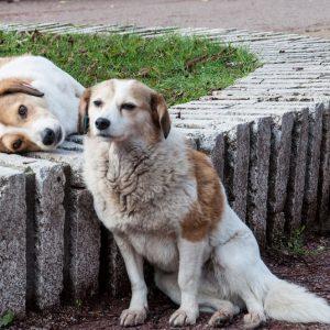 След случай на нахапано дете: 50 лева глоба за куче без регистрация във Велики Преслав